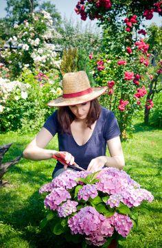 Hydrangea Care, Hydrangeas, Gardening For Beginners, Gardening Tips, Wilted Flowers, Old Milk Jugs, Zucchini Plants, Gutter Garden, Garden Care