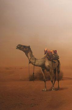 Wind erosion in the desert, White Desert / Egypt Le Nil, Desert Places, Deserts Of The World, Child Of The Universe, Islamic Paintings, Desert Life, Arabian Nights, East Africa, Belle Photo