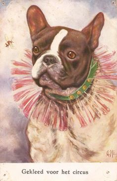 Vintage French Bulldog illustration