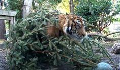 christmas zoo enrichment