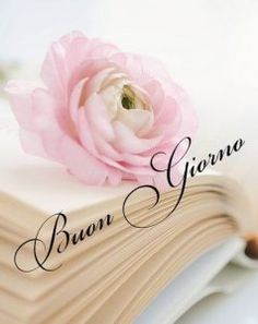 un Buongiorno per tutti - Non Solo Musica e Ricette Italian Memes, Italian Quotes, Italian Greetings, Good Morning Images Flowers, Good Day Quotes, Singing Time, Happy Birthday Messages, Good Morning Messages, Morning Greeting