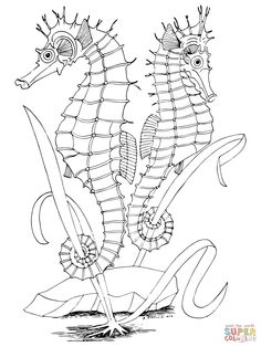 Two Seahorses coloring page | SuperColoring.com