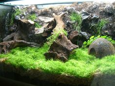 Give me some ideas for terrarium containers