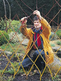 weaving a willow screen