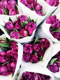 Would love these colours for my bouquet. My Flower, Fresh Flowers, Pink Flowers, Beautiful Flowers, Purple Tulips, Flower Bomb, Purple Bouquets, Magenta, Flower Bouquets