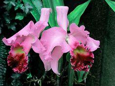 Orchids, Longwood Gardens, Imagination IMG_0080 A | Longwood… | Flickr