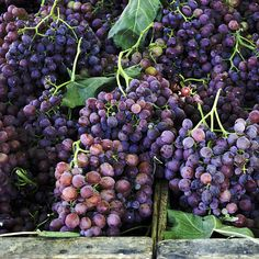 Farmers Market Grapes by Cathie Richardson