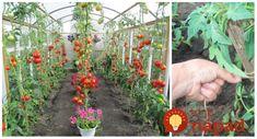 Garden, Plants, Compost, Garten, Lawn And Garden, Gardens, Plant, Gardening, Outdoor