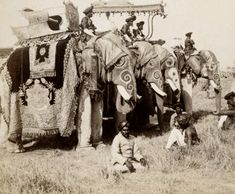 Vintage India - Delhi :: State Elephants of the Maharaja of Gwalior