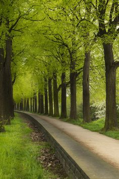 mistymorningme:  Green tunnel by creyesk