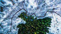 """1er prix, catégorie """"nature"""" — Forêt de KalbyrisDanemark""""C'était mon premier voyage photo avec un drone. Mais j'ai pu le faire voler seulement sept fois à cause du terrible climat que nous avons au Danemark en hiver"""", raconte Michael Bernholdt."""