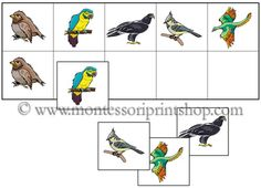 Montessori-inspried bird activities that can be used for See what I saw activities
