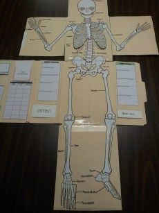 The bottom flap is flipped down to reveal the lower half of the skeleton.