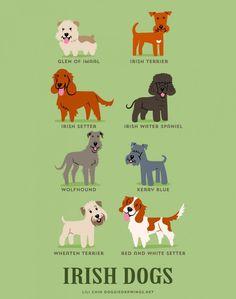 Glen do Imaal, Terrier irlandês, Setter irlandês, Cão d'água irlandês, Lébrel irlandês, Kerry blue terrier, Soft coated wheaten terrier e Setter irlandês ruivo e branco são raças IRLANDESAS