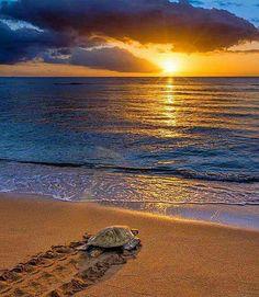 C'est l'appel de la Source Primordiale que l'inspiration nous chuchote à suivre.  Tel est  le merveilleux Chemin Sacré  de tout un chacun. Merci la Vie  de nous offrir ce Présent à vivre....