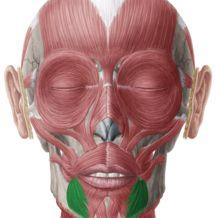 Depressor Anguli Oris Muscle