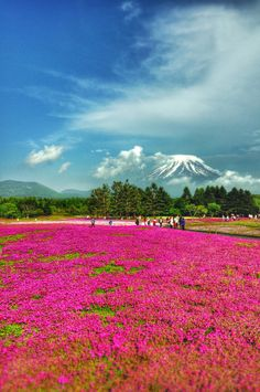 PINK-Japan by Chaiwat Ittipongsopon on 500px