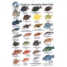Hawaiian reef Fish pitchers Names List | Posted: Sunday ...