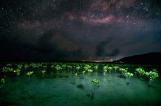 Floras of the Milkyway