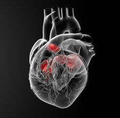 A recent study published in the journal PLoS One found that a single dose of Sildenafil is not associated with clinical improvement of right ventricular function as measured by cardiovascular magnetic resonance in patients with PH-related heart failure.