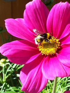 Frøken Humlesnurr I Love Bees, Busy Bee, My Favorite Things, Bumble Bees, Nature, Flowers, Country Living, Animals, Beautiful