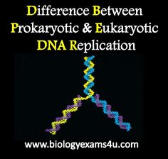 63 best genetics structure of dna replication images on difference between prokaryotic and eukaryotic dna replication fandeluxe Images