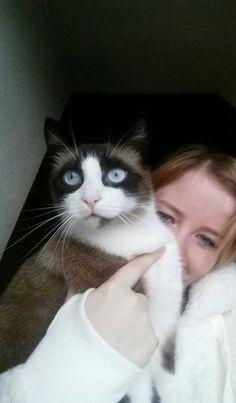 kakitis Cat | Pawshake