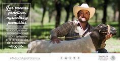 Las buenas prácticas agrícolas y pecuarias son un conjunto de principios, normas y recomendaciones técnicas aplicadas a la producción de alimentos. SAGARPA SAGARPAMX #MéxicoAgroPotencia
