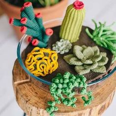 Crochet DIY project to make these beautiful succulent plants to adorn any room in your home.