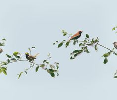 Flora and Fauna by Andrew B. Myers. #photography
