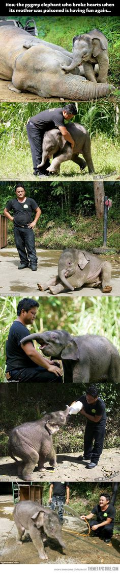 Baby elephant is rescued after his mom's death…