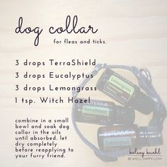 essemtial oil flea collar for dogs