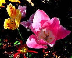 """Floral Medley"" Fine Art Prints"