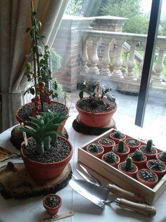 Amazing plant pot / allotment cake Allotment Cake, Cake Blog, Potted Plants, Terrarium, Amazing, Inspiration, Home Decor, Pot Plants, Terrariums