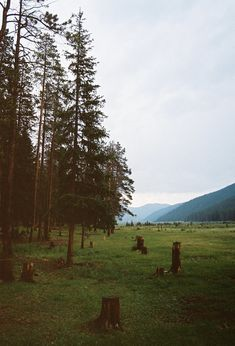 Burning Bear 35mm Film Photography Print by JenneMooreFilm