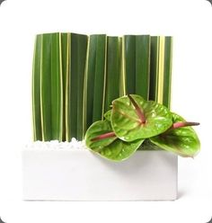 ♥ Green anthurium arrangement designed by Floral Art via Botanical Brouhaha. by liliana #anthurium #flowerarangement #green