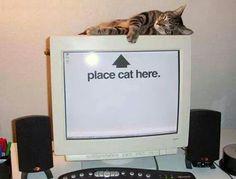 Cat here :-)