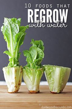 Save money by regrowing these 10 foods that regrow in water without dirt. Perfect if you don't have room for a garden & trying to save a few bucks! Regrow lettuce, regrow celery... regrow vegetables with one of the best budget tips of the year, and easy for anyone to do!