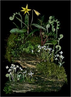 Shady Path, Woodland Photographs- Scanner as a Camera - Ellen... - Scanner Photography By Ellen Hoverkamp