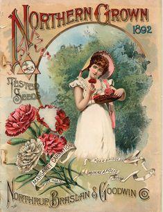 vintage seed packet art  1892  Northern Grown #carnations #vintage