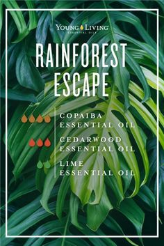 6 Copaiba Oil Uses & Benefits Rainforest escape essential oil diffuser blend Copaiba Oil Uses, Copaiba Essential Oil, Lime Essential Oil, Essential Oil Diffuser Blends, Doterra Oil Diffuser, Cedarwood Essential Oil Uses, Cedarwood Oil, Design Facebook, Oil Benefits