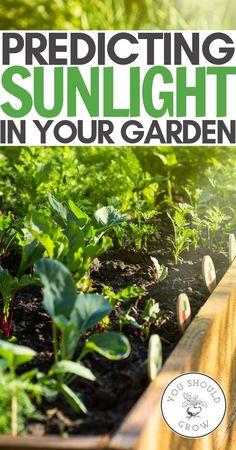 Gardening - Garden Plan - Sun Mapping - Starting A Garden From Scratch - Gardening For Beginners - Beginner Gardening Tips - Garden Ideas - Vegetable Garden - Herb Garden - Backyard Garden - Organic Gardening