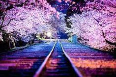「ピンクの風景」の画像検索結果