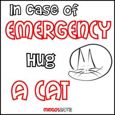In Case Of Emergency   #cats #gatos #gatetes #catslovers #catlover #love #amor #meow #miau #hugs #kitten #abrazo