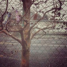 139- @1nobubu 樹 #30jc
