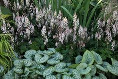 My Favorite Plant Combinations 16