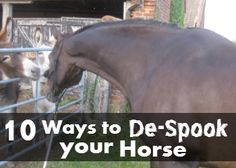 Do you have a spooky horse? Try these 10 tips to de-spook your horse from guest writer Trixie Hod...