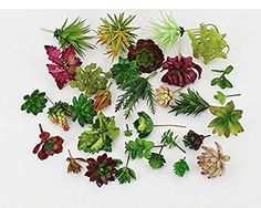 10 PcsPlastic Different Mini Succulents Artificial Cactus Plant  Artificial unkillable succulents mini plants  Use as Ideal landscape, weddings, party, festivals, parties , home decorations, Table centerpiece, gardens, fencing, Restaurant Landscape Office Coffee Shops floral tributes, sheds and many more.  Easy to clean-please dry Please choose LOPKEY store to buy genuine products,you are assured the quality and quantities.         10 PcsPlastic Different Mini Succulents Artificial C..