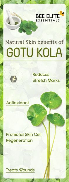 #Gotukola is an herb in the parsley family. It is commonly used in Traditional Chinese and Ayurvedic medicine. The above-ground parts are used to make medicine. Gotu kola is used to treat bacterial, viral, or parasitic infections such as urinary tract infection (UTI), shingles, leprosy, cholera, dysentery, syphilis, the common cold, the flu, H1N1 (swine) flu, elephantiasis, tuberculosis, and schistosomiasis. #BeeEliteEssentials #skincare #antiaging Gotu Kola Benefits, Reduce Stretch Marks, Swine Flu, Urinary Tract Infection, Ayurvedic Medicine, Brain Health, Traditional Chinese, Parsley, Natural Skin