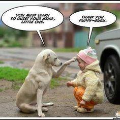 Cute!  Puppy zen.